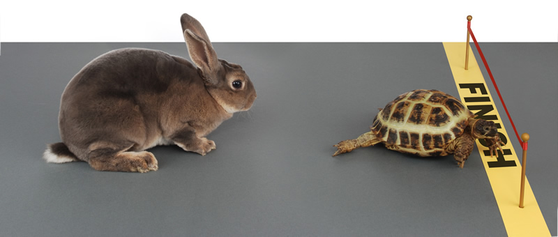 immigration-reform-tortoise-and-hare-strategy-choice